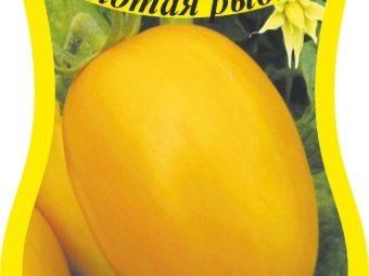 Исполняет желания дачников о богатом урожае — томат «золотая рыбка» и секреты его выращивания