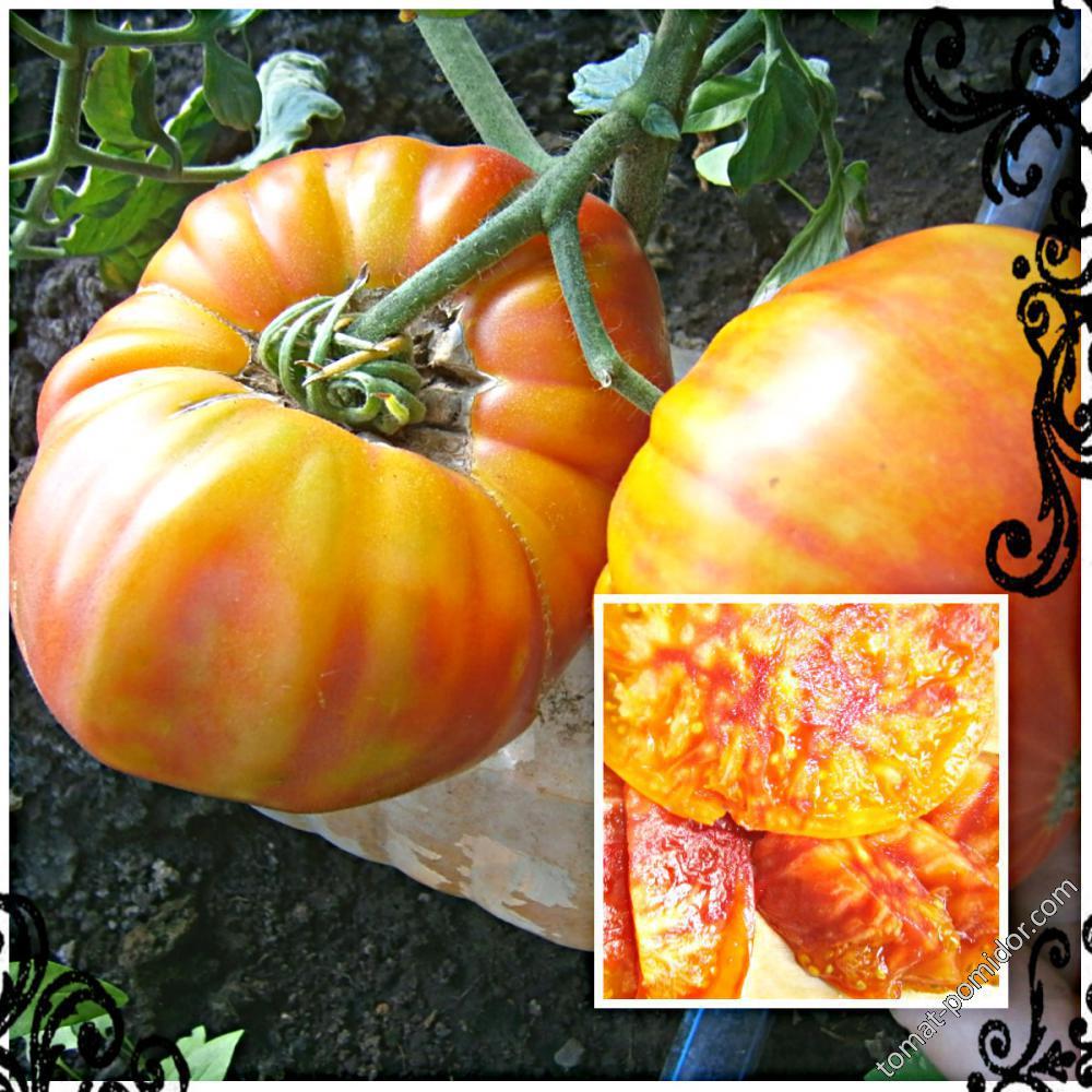 Томат ананас: описание и характеристика сорта, отзывы садоводов с фото