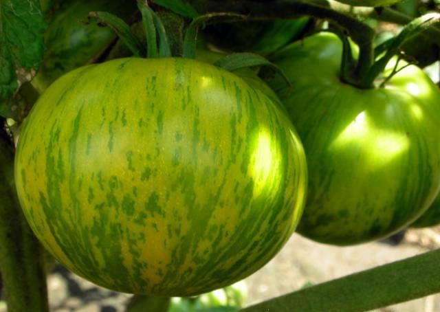 Зеленые черри — бесполезная экзотика или вкуснейшие томаты? - огород, сад, балкон - медиаплатформа миртесен