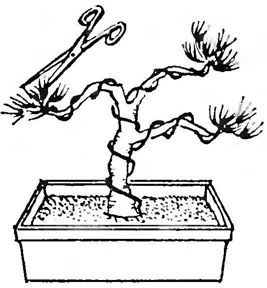 Какие растения подходят для выращивания в стиле бонсай