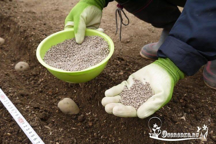 Как подкормить огурцы мочевиной, применение удобрения на огороде