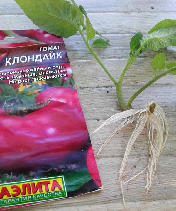 Томат клондайк розовый: отзывы об урожайности, фото семян, описание сорта