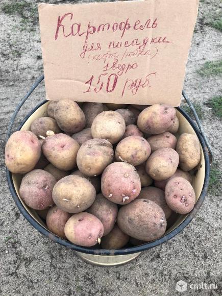 Сорт картофеля иван да марья: описание и характеристика, отзывы
