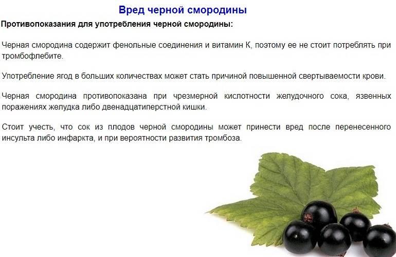Черная смородина – полезные свойства, состав и противопоказания (+ 16 фото)