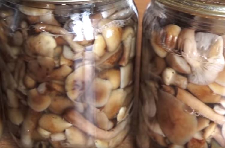 Маринованные опята в домашних условиях. рецепты заготовки на зиму — вкусно и быстро