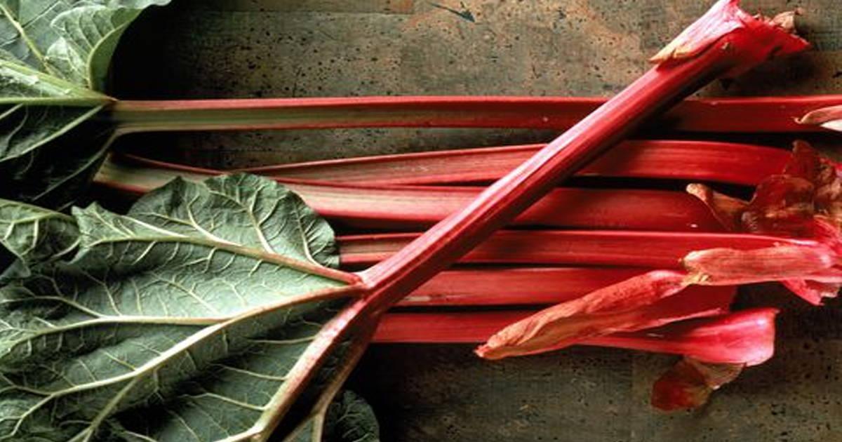 Растение ревень: полезные свойства и его применение, рецепты народной медицины