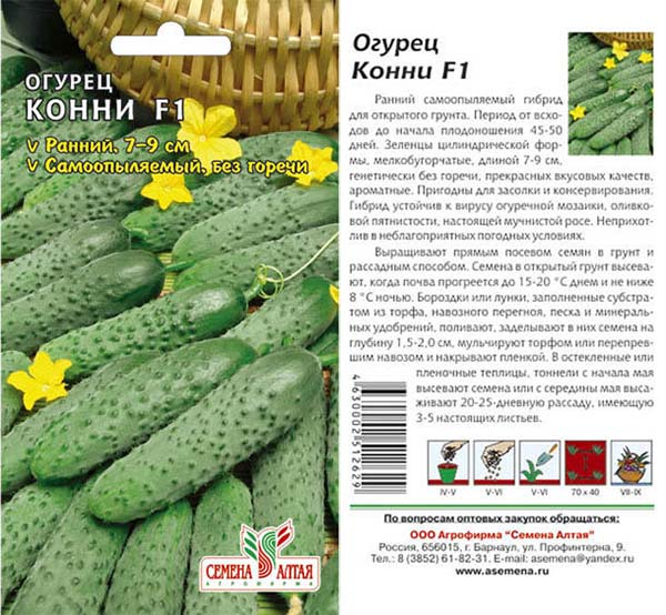 Пучковые огурцы – 4 основных класса, технология выращивания и выбор сорта