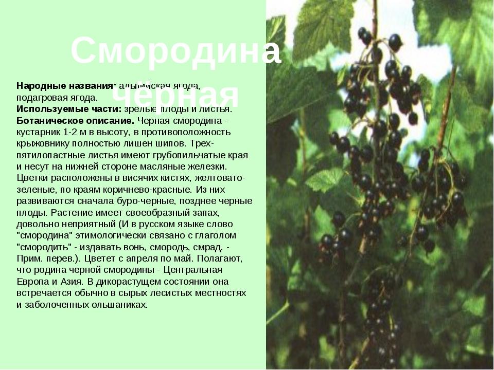 Смородина — традиционные виды, обработка, уход, посадка и размножение + 98 фото