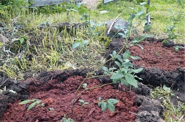 4 способа, как подкислить почву на участке