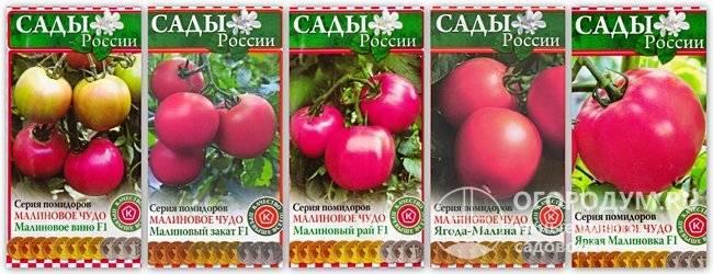 """Помидоры """"малиновое чудо"""": описание и особенности выращивания"""