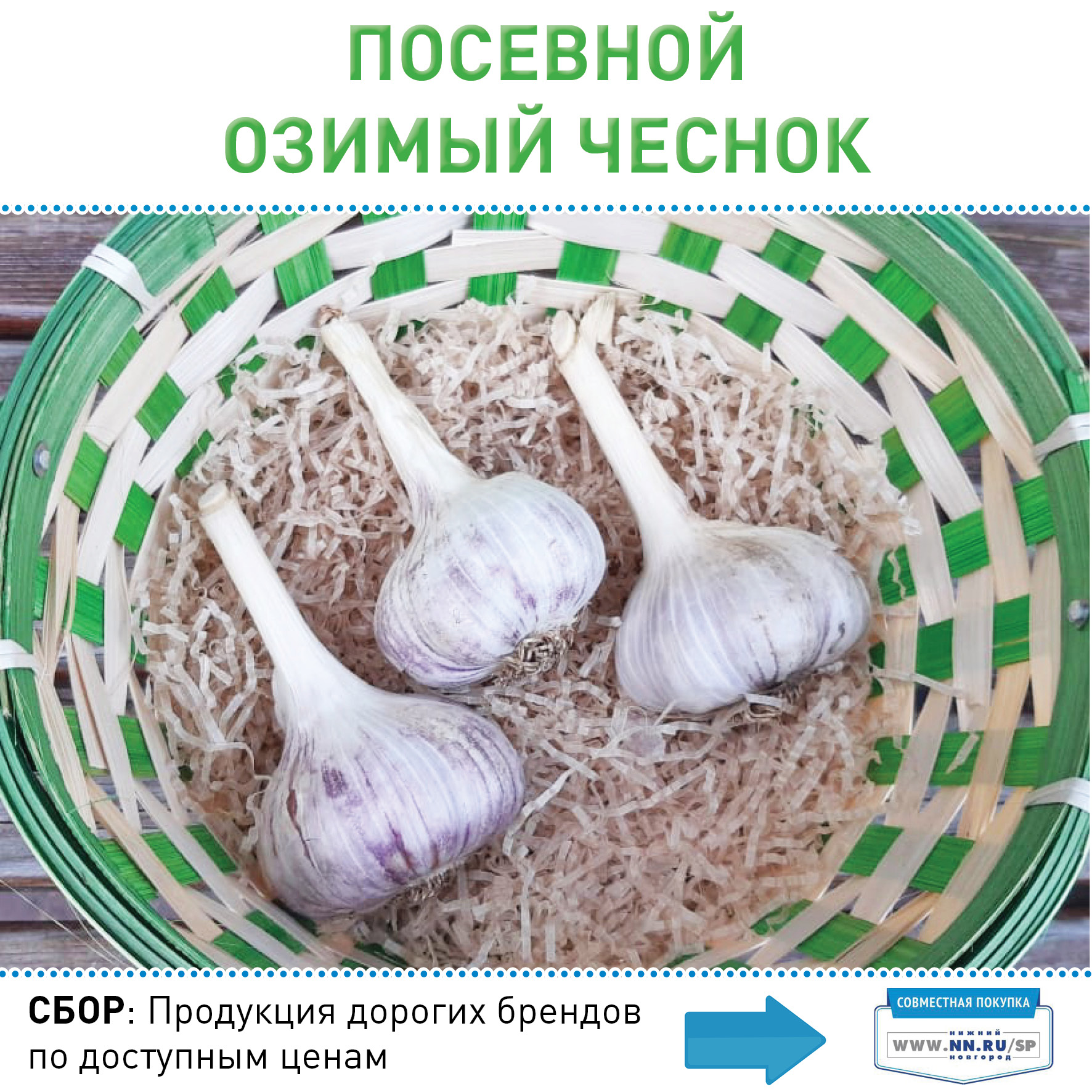 Острый и урожайный: чеснок юбилейный грибовский для посадки под зиму