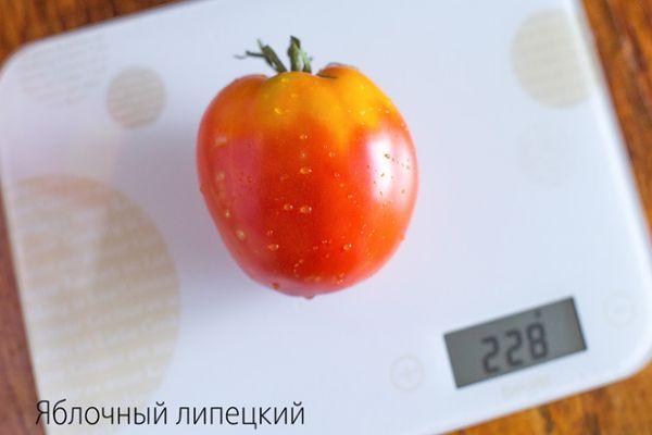 Томат яблочный липецкий: характеристика и описание среднеспелого сорта с фото