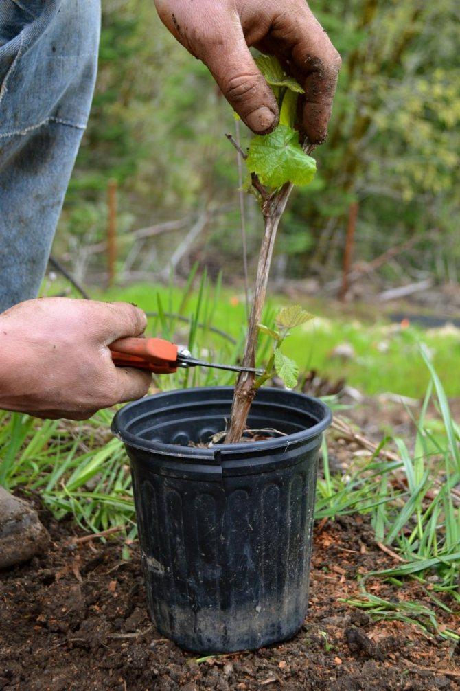 Обеззараживание почвы - что использовать, как применять?