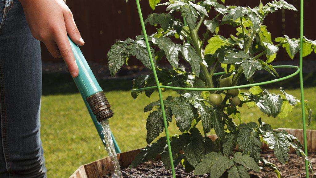 Кабачки выращивание и уход в открытом грунте: советы и хитрости, видео и фото