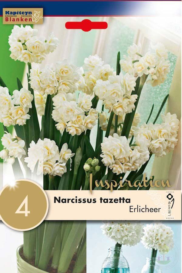 Нарцисс авалон описание сорта правила ухода и особенности выращивания