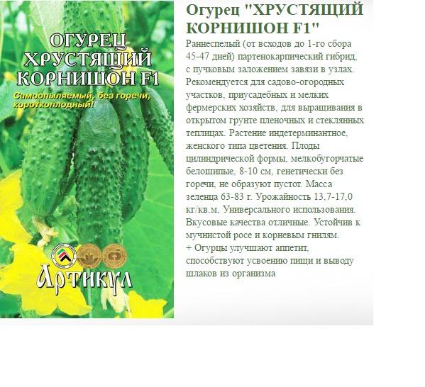 Сорт огурцов маринда f1: описание гибрида корнишонов, отзывы, фото и показатели урожайности