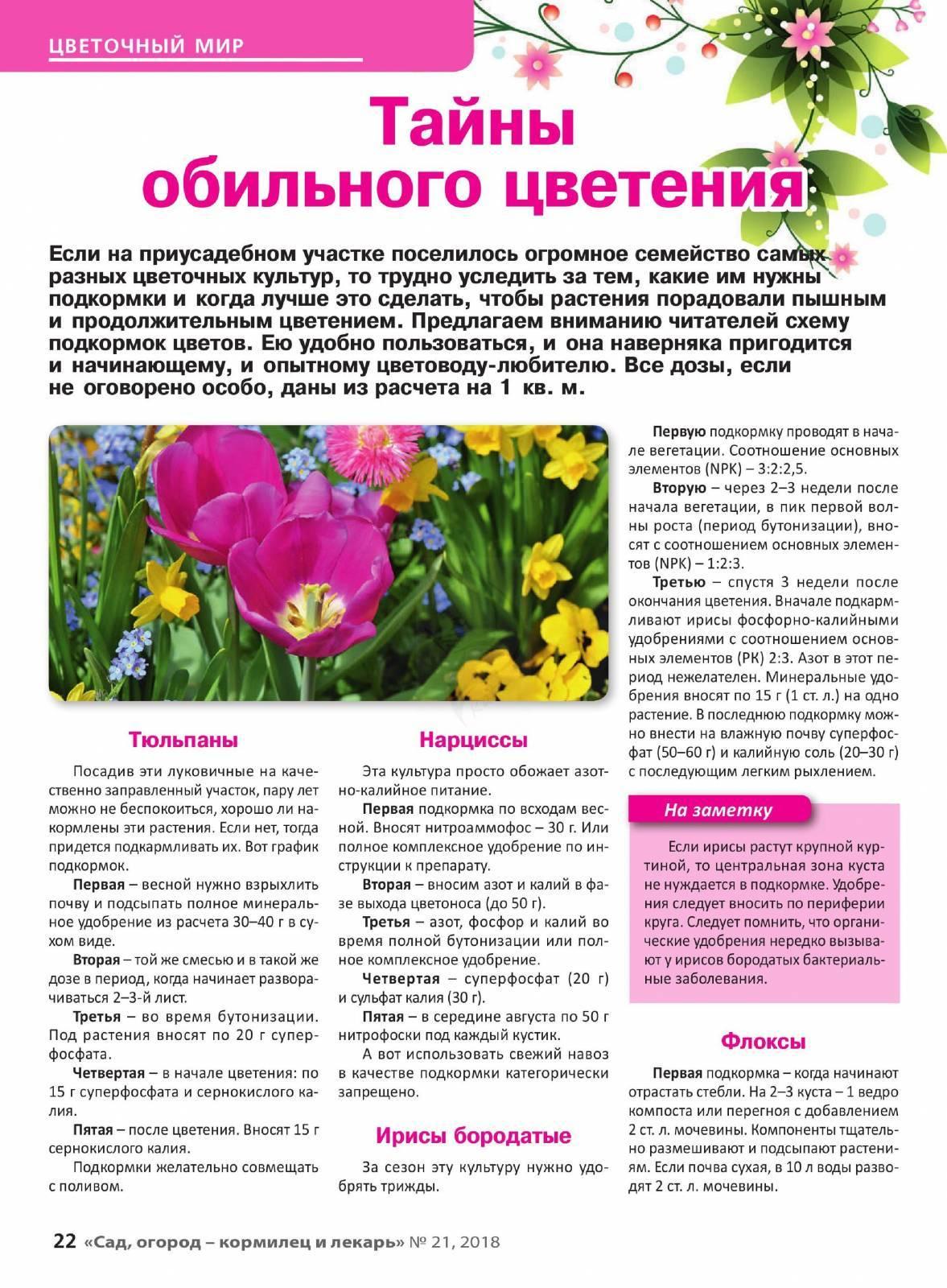 Подкормка ирисов - весной и осенью