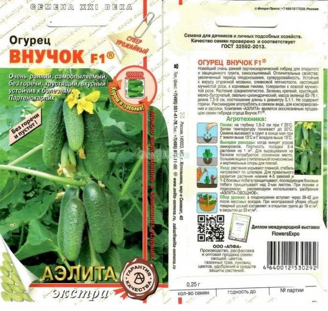 Фото, видео, описание, посадка, характеристика, урожайность, отзывы о раннеспелом гибриде огурцов «бабушкин внучок f1».