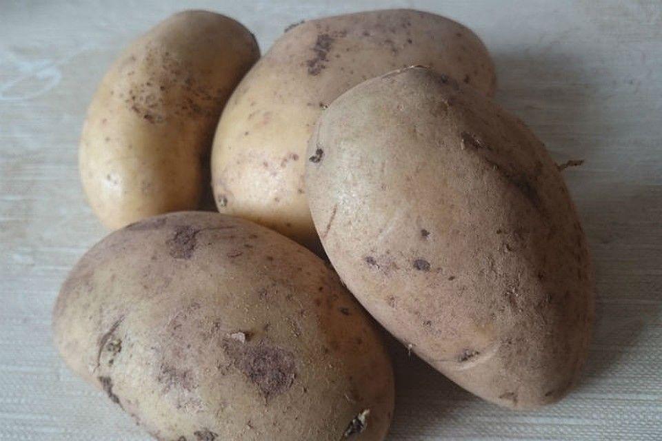 Картофель зорачка: характеристика и описание сорта, отзывы, урожайность, фото