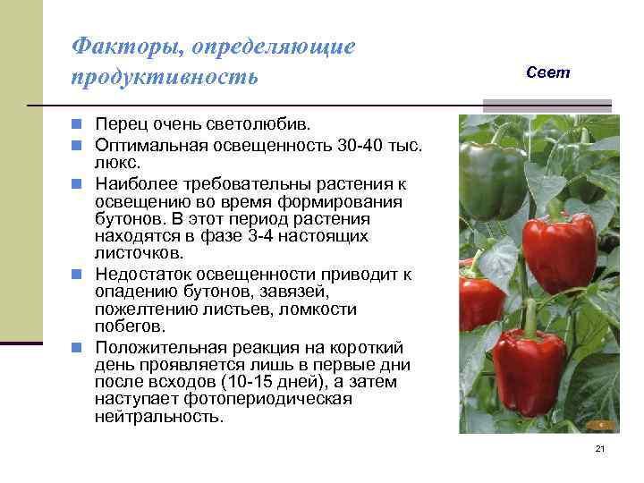 Формирование перца в теплице: схема, правила формирования