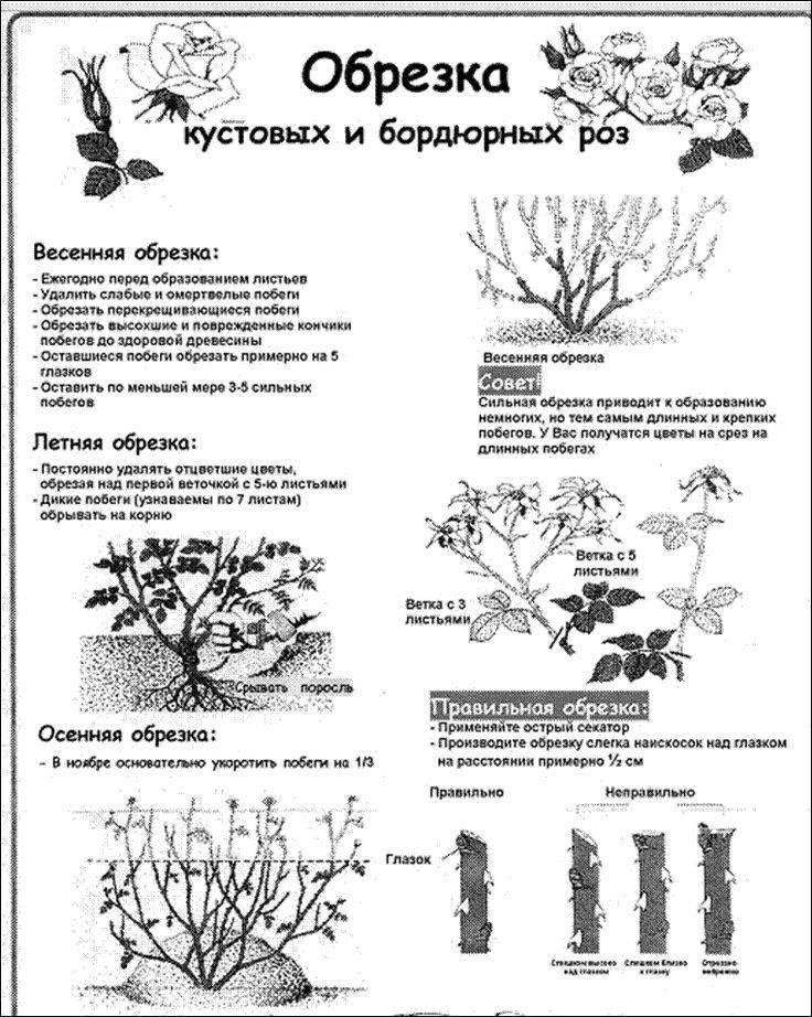 Уход за розами осенью: подготовка к зиме по месяцам и особенности обрезки и укрытия разных сортов роз