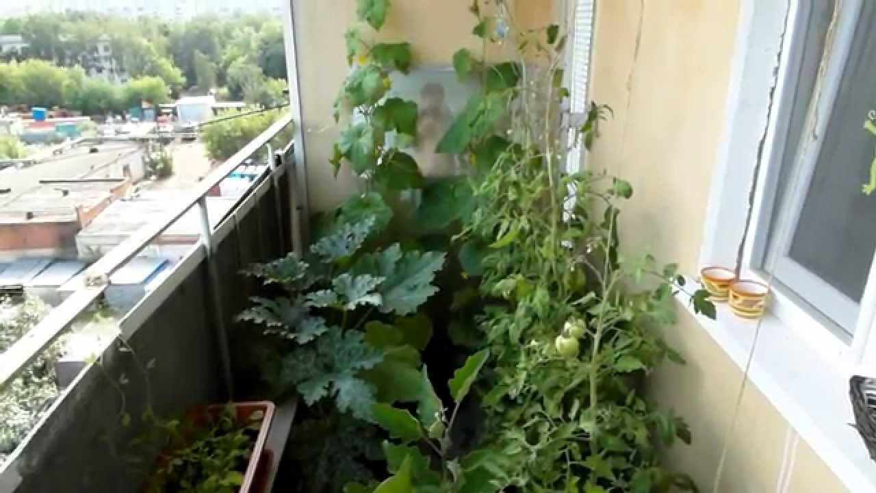 Огород на балконе: правила обустройства и выращивания различных культур