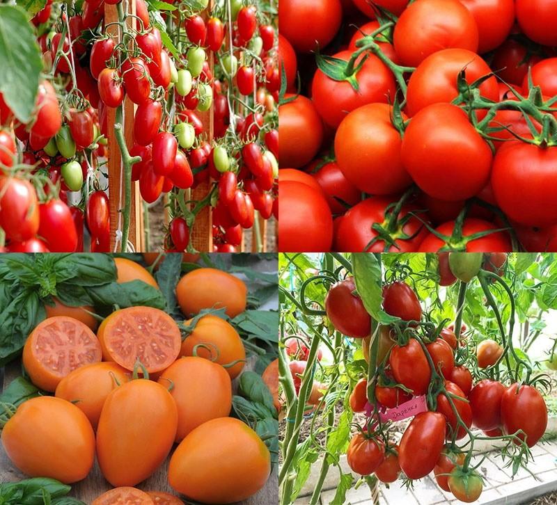 Лучшие розовые сорта томатов для теплиц и открытого грунта с фото и описанием