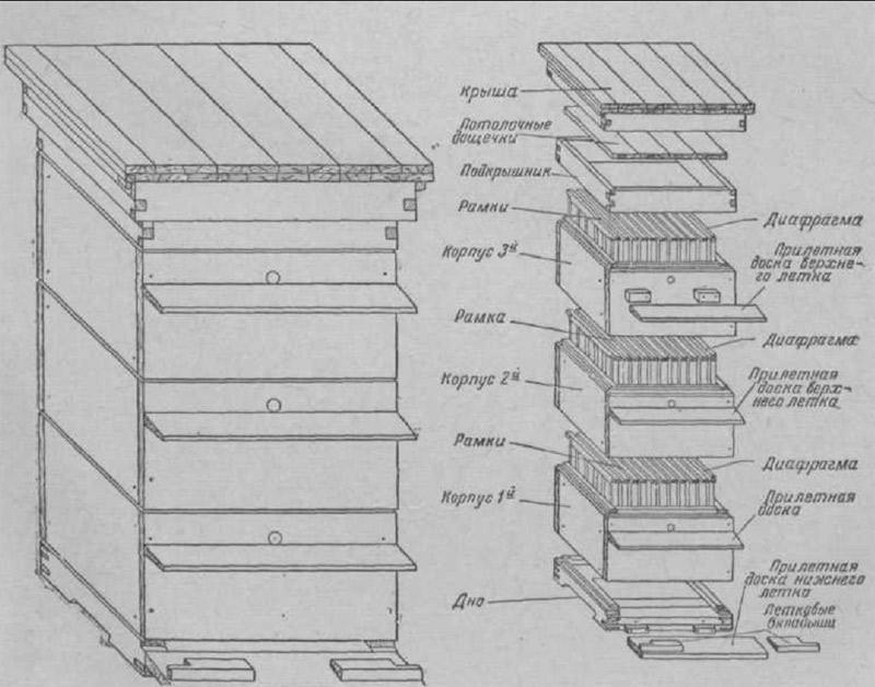 Улей для пчел: устройство, особенности, конструкции и как выбрать