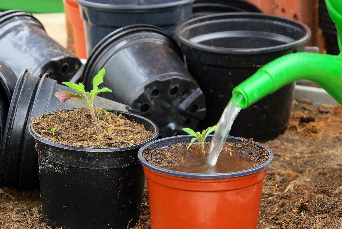 Подкормка огурцов марганцовкой | вырасти сад!