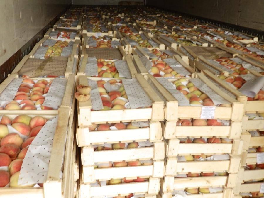 Как хранить абрикосы: сохранить свежими, на зиму, в холодильнике