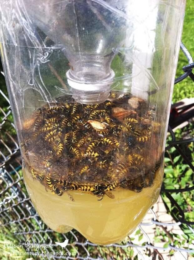 Как избавиться от пчел соседа и дикого роя - методы борьбы