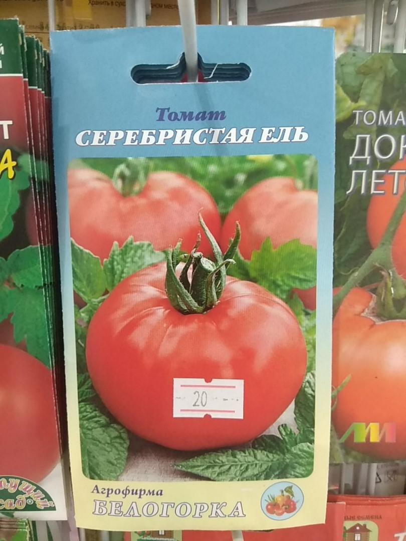Томат серебристая ель — описание и характеристика сорта | zdavnews.ru