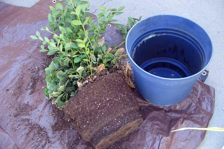Поливаем семена и рассаду правильно: чем поливать и в какоевремя