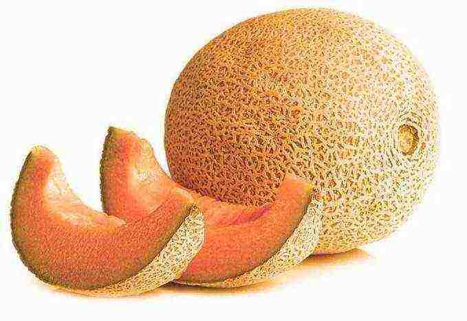Оранжевая дыня: описание лучших сортов дынь с яркой мякотью