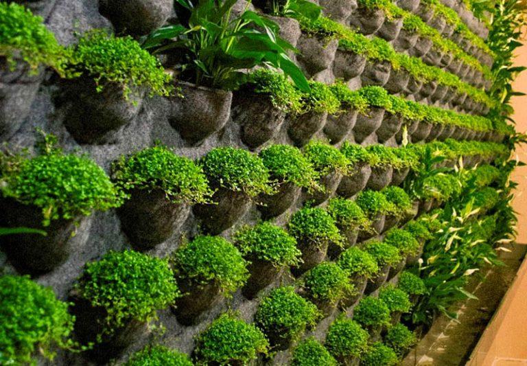 Вертикальное озеленение (58 фото) - интересный способ экономии пространства - happymodern.ru