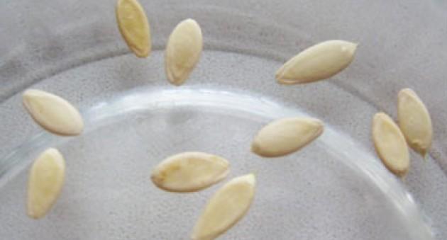 Как подготовить семена огурцов к посадке – правильная последовательность действий