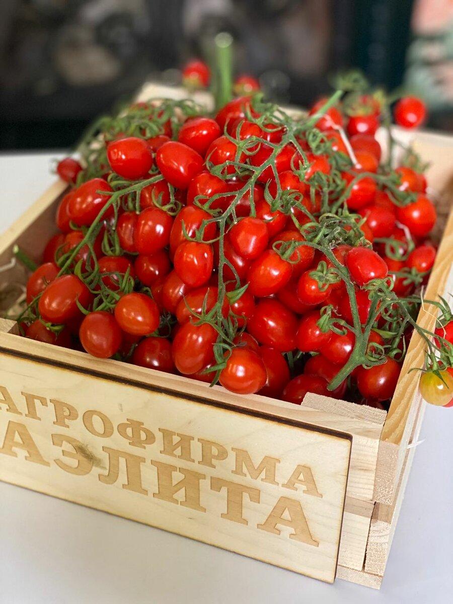 Знакомимся с черными сортами помидор