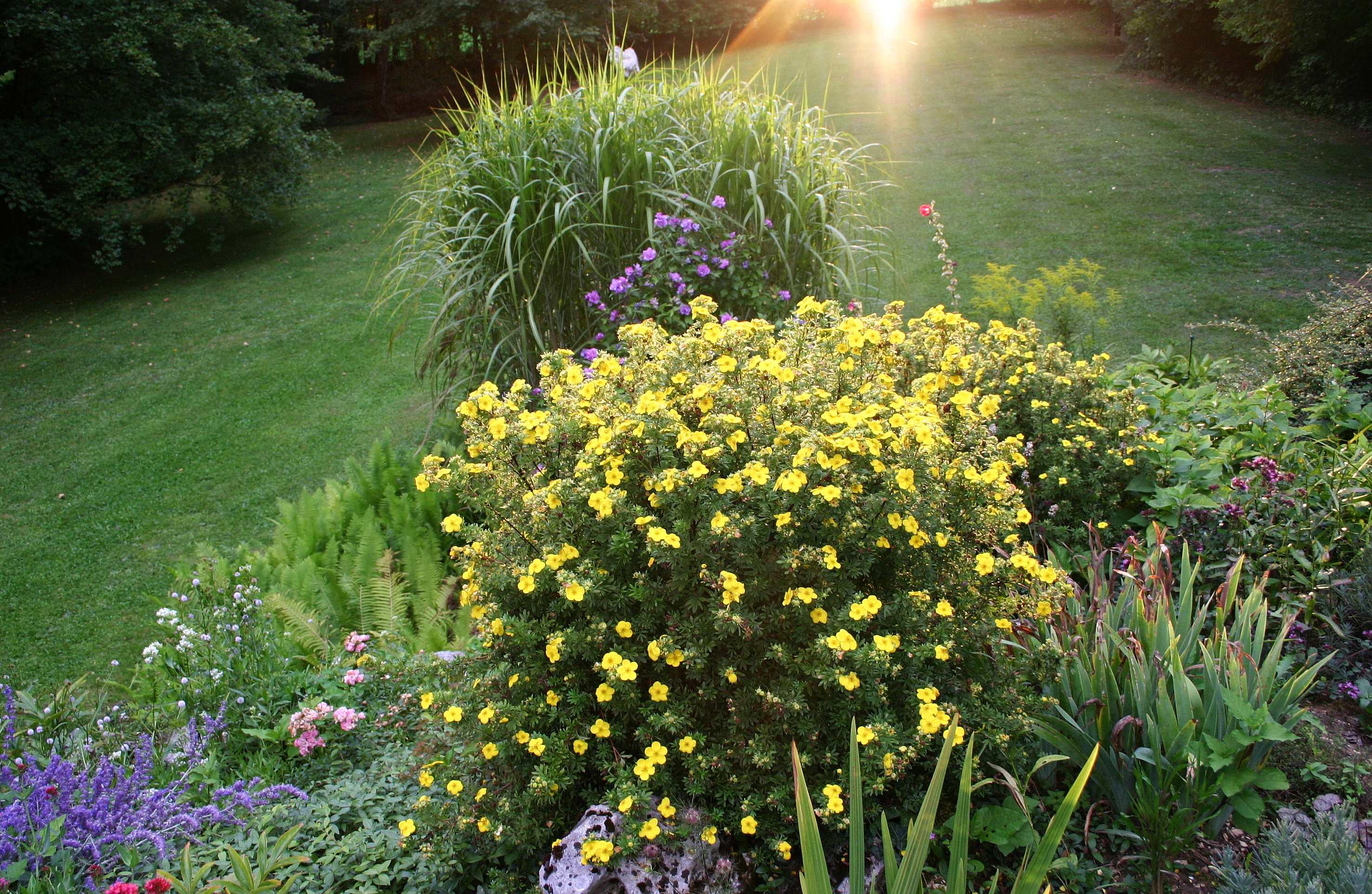 Многолетники и кустарники в кадках: какие растения можно выращивать в контейнерной культуре?