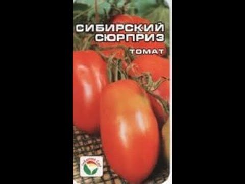 Описание сорта томата сибирский изобильный, его характеристики и урожайность – дачные дела