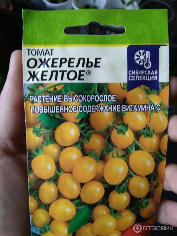Рекомендации по выращиванию томата «желтый гигант» и описание сорта