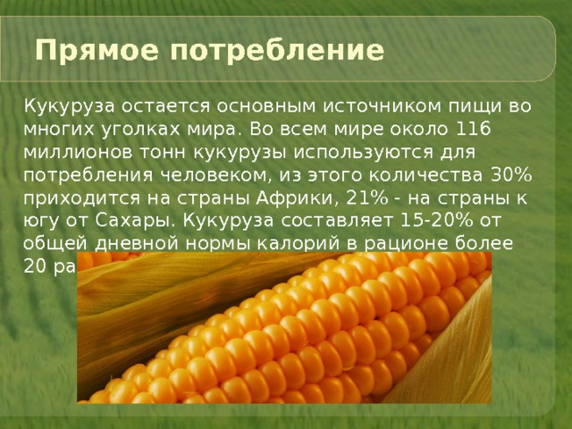 Кукуруза в чем польза и есть ли вред?