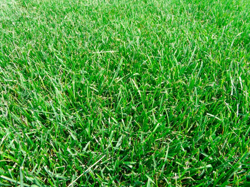 Мавританский газон (46 фото): плюсы и минусы цветущего газона, состав семян, каким может быть в ландшафтном дизайне, отзывы