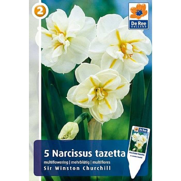 Нарцисс шантерель: описание сорта и характеристики, посадка и уход