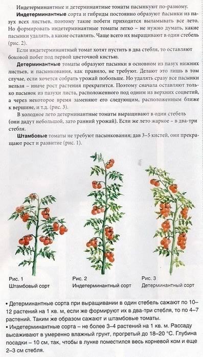Штамбовые томаты: что это такое, выращивание