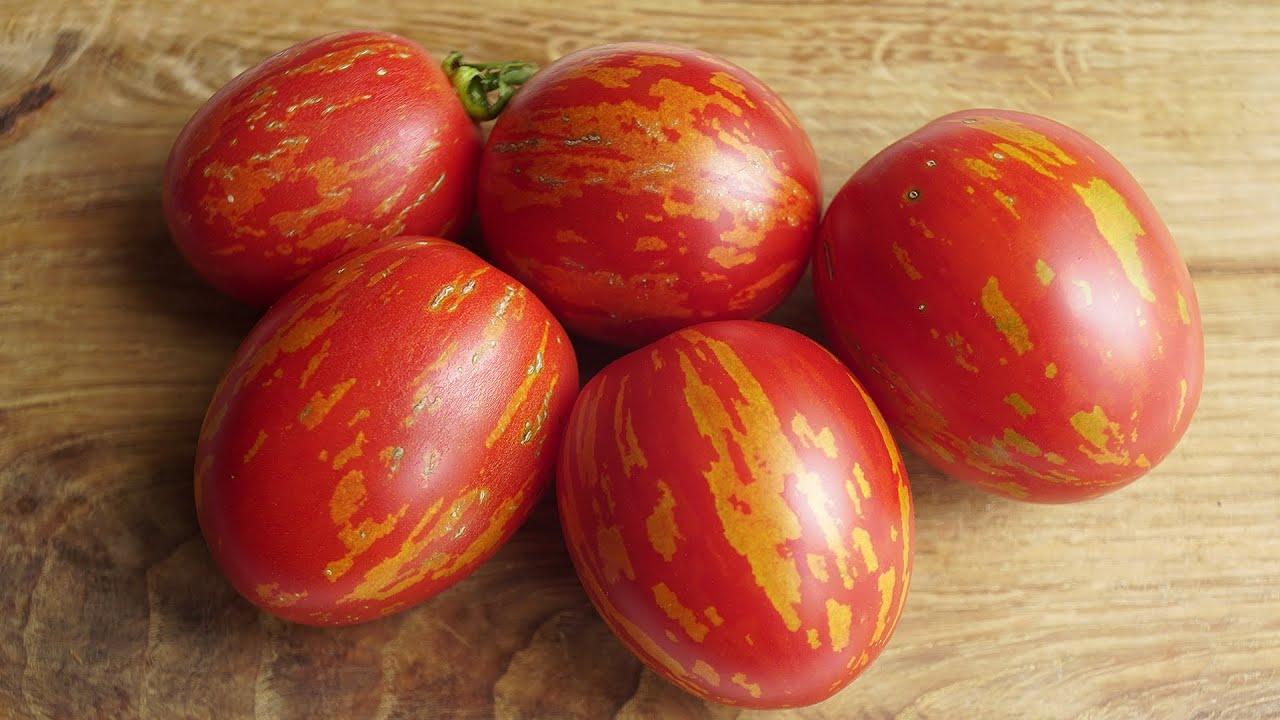 Характеристика сорта томатов пасхальное яйцо
