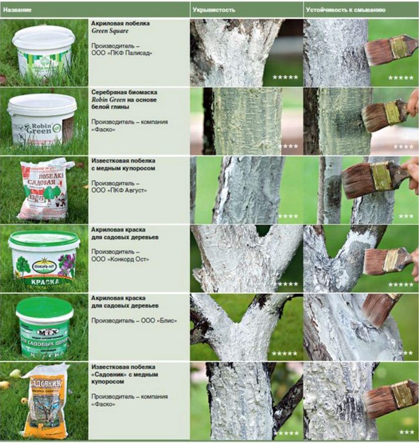 Раны на плодовых деревьях: лечим навсегда! – наш огород