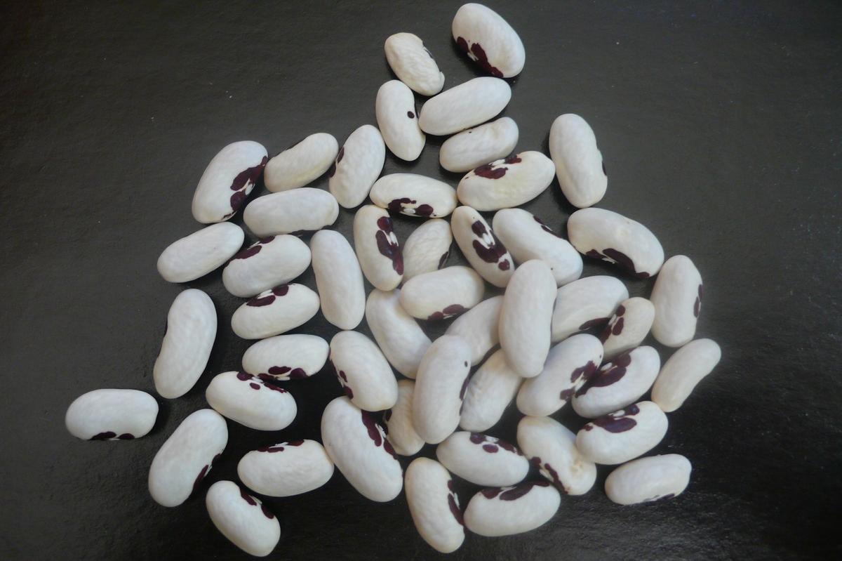 Черная фасоль: польза и вред для человека, лечебные ствойства