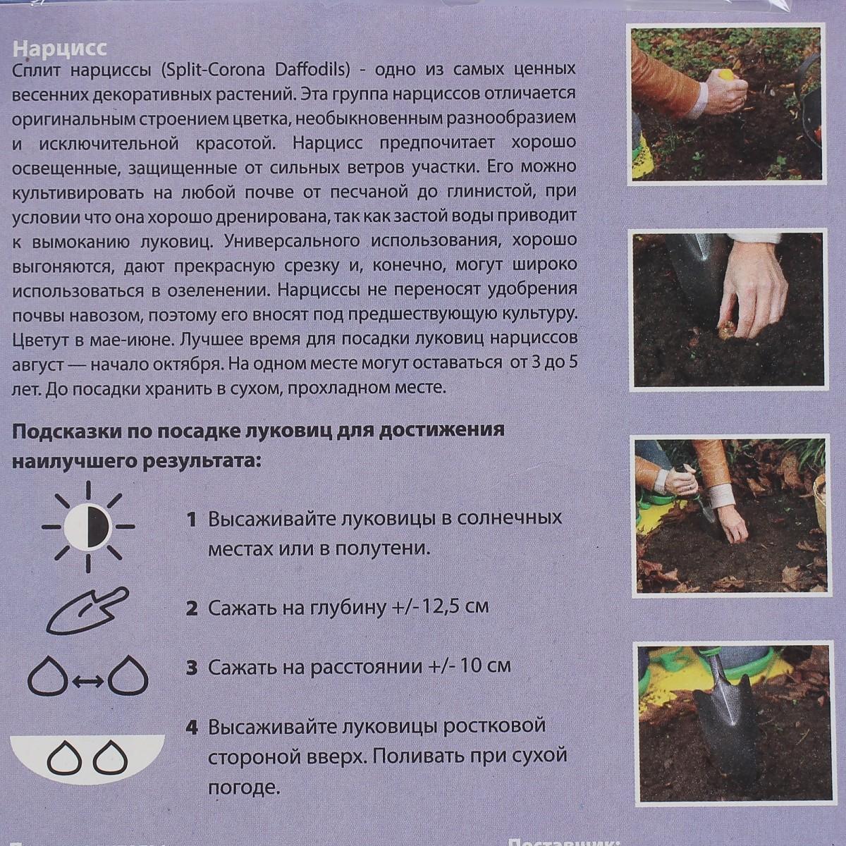 Главное о выращивании нарциссов | cельхозпортал