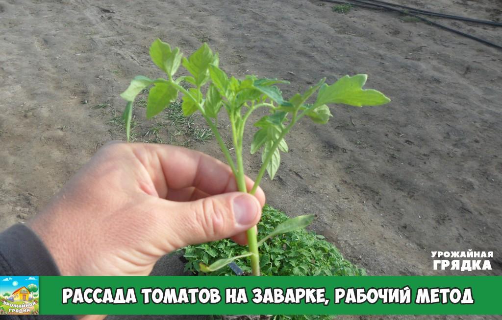 Закаливание рассады. зачем необходимо? как проводить в домашних условиях? правила, температуры — ботаничка.ru