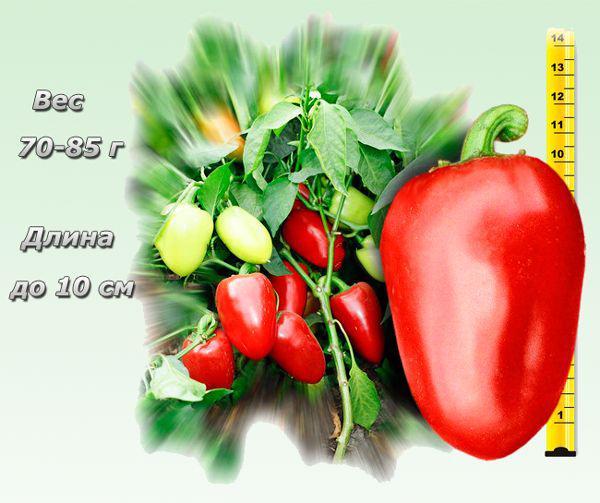 Перец ласточка: отзывы и фото, описание и характеристика урожайного сорта